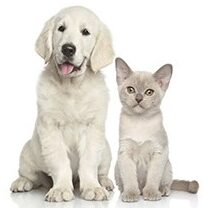 Pet Stop Products