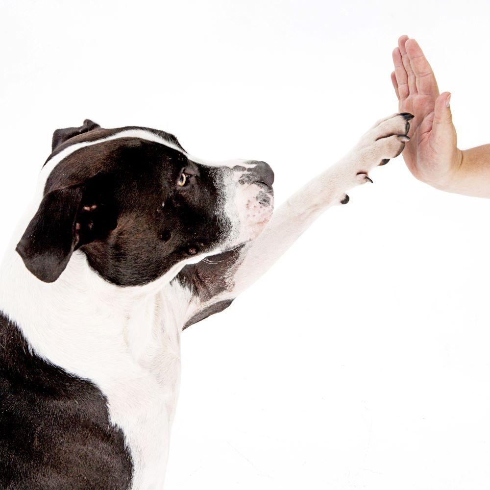 Pet Stop Dog Fencing